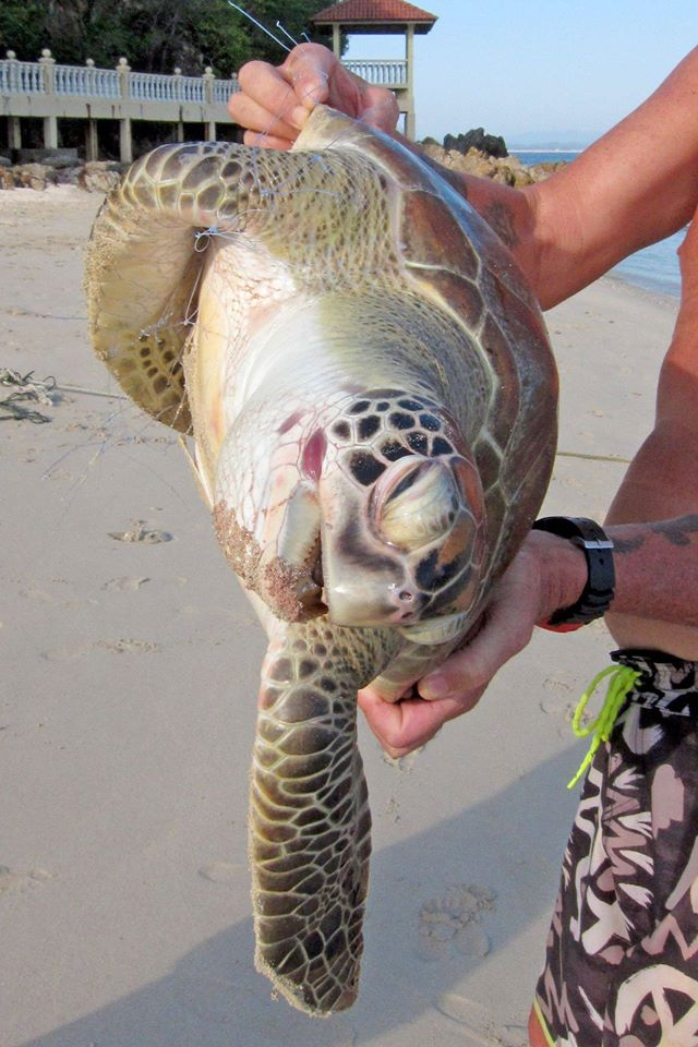 """""""The beautiful turtle we found dead last June with plastic fishing nets around it."""""""