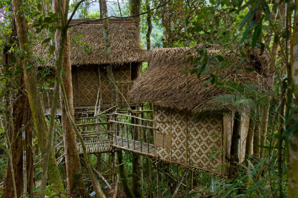 Image from Terra Tree House