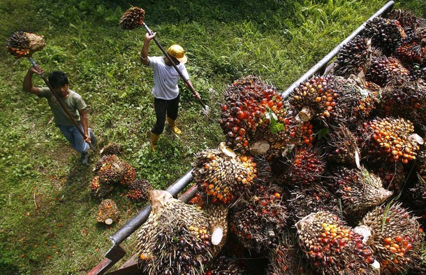 Image from My Palm Oil