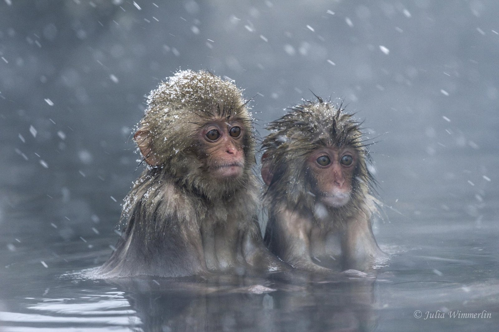 This Zoo In Japan Killed 57 Snow Monkeys By Lethal Injection - photo#34