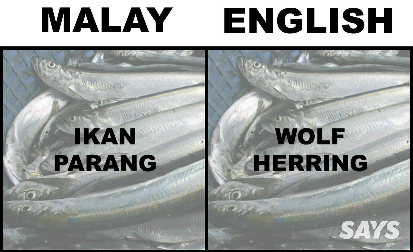 What's Ikan Patin In English? Here Are 17 Translations Of