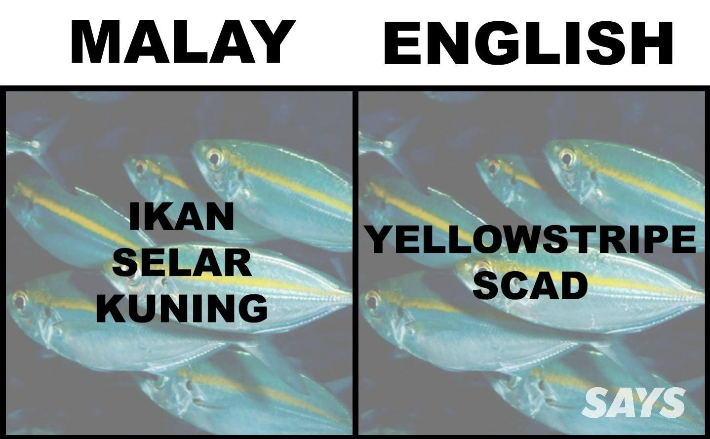 What's Ikan Patin In English? Here Are 17 Translations Of Fish Malaysians Love