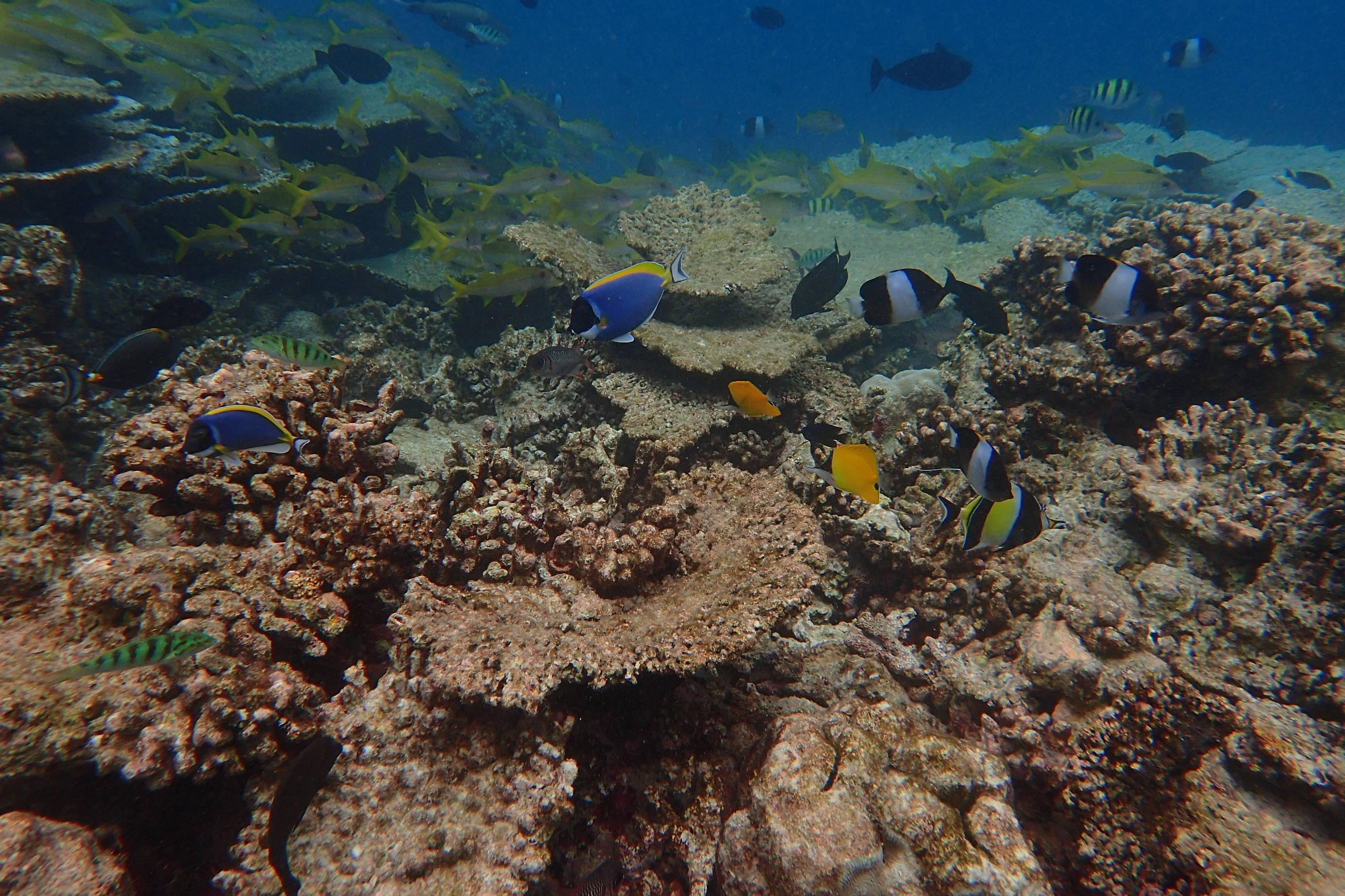 You won't want to miss the snorkeling safari.