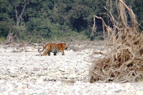 Image from WWF India