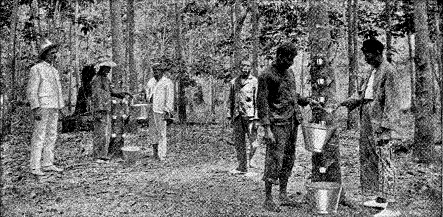 An undated photo of Indian labourers at a rubber plantations in British Malaya.