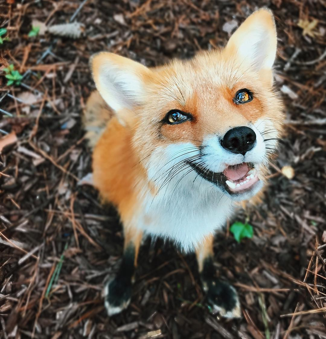 10 Most Popular Foxes You Should Already Know By Now