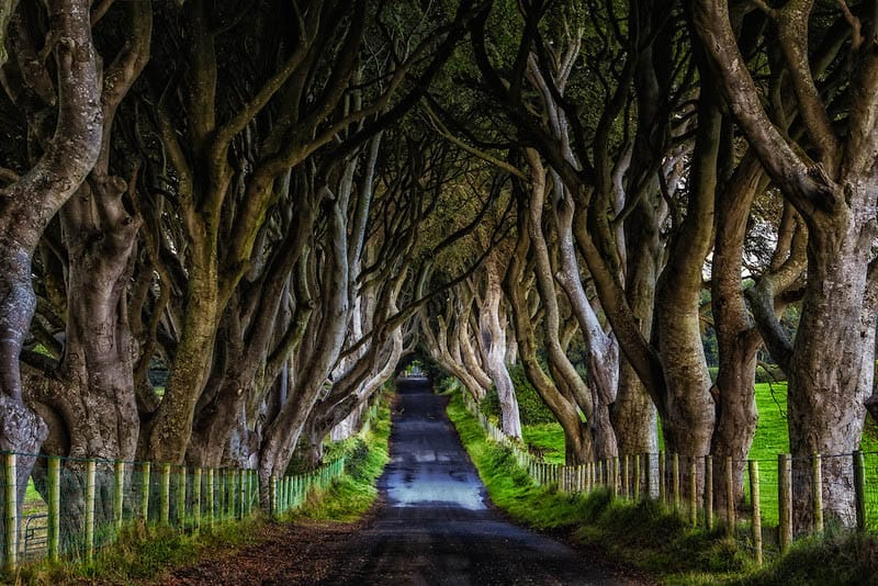 The Dark Hedges is said to be the most photographed location in Northern Ireland and appears in Season 2 of Game of Thrones as The Kingsroad.