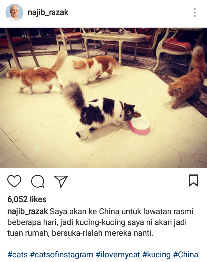 """""""I am going to China on a official visit for a few days. So, my cats will be like the house owners, they're going to have a lot of fun."""""""