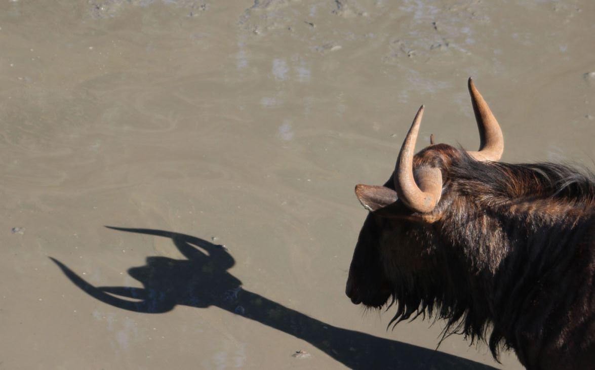 Image from Paulette Struckman/Comedy Wildlife Photo Awards/Barcroft