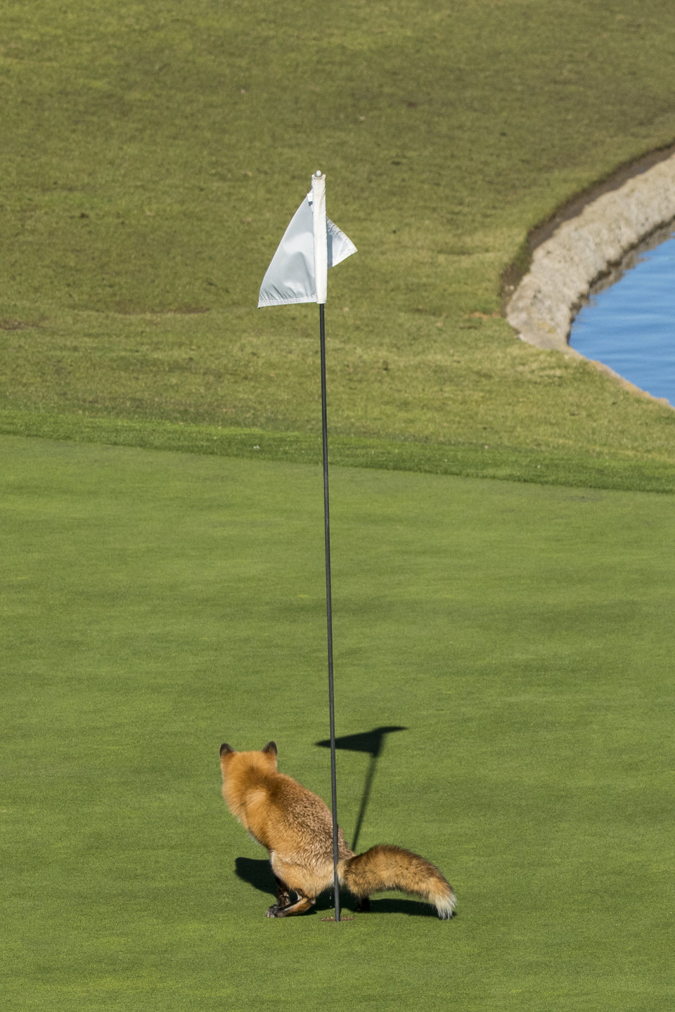 """""""Must Have Three-putted"""" by Douglas Croft"""