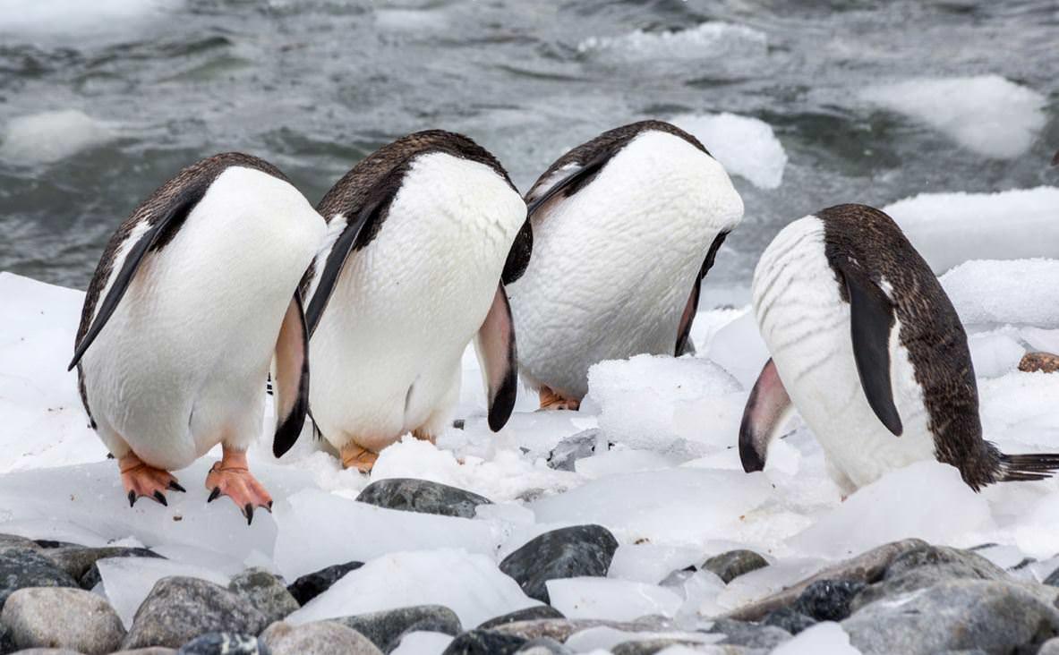 Image from Monique Joris/Comedy Wildlife Photo Awards/Barcroft