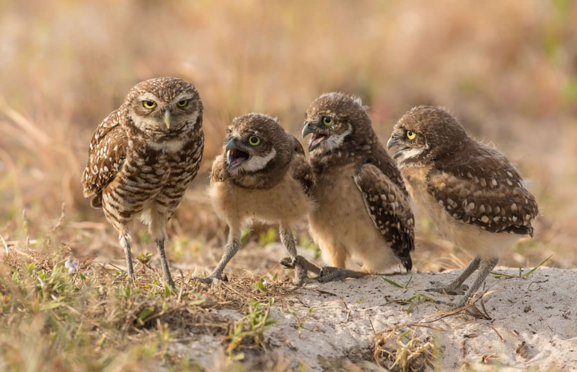 Image from Barb D'Arpino/Comedy Wildlife Photo Awards/Barcroft