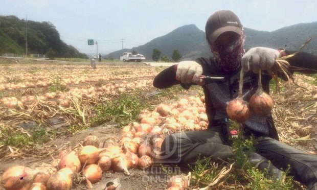 A Malaysian illegal worker at a farm in South Korea.
