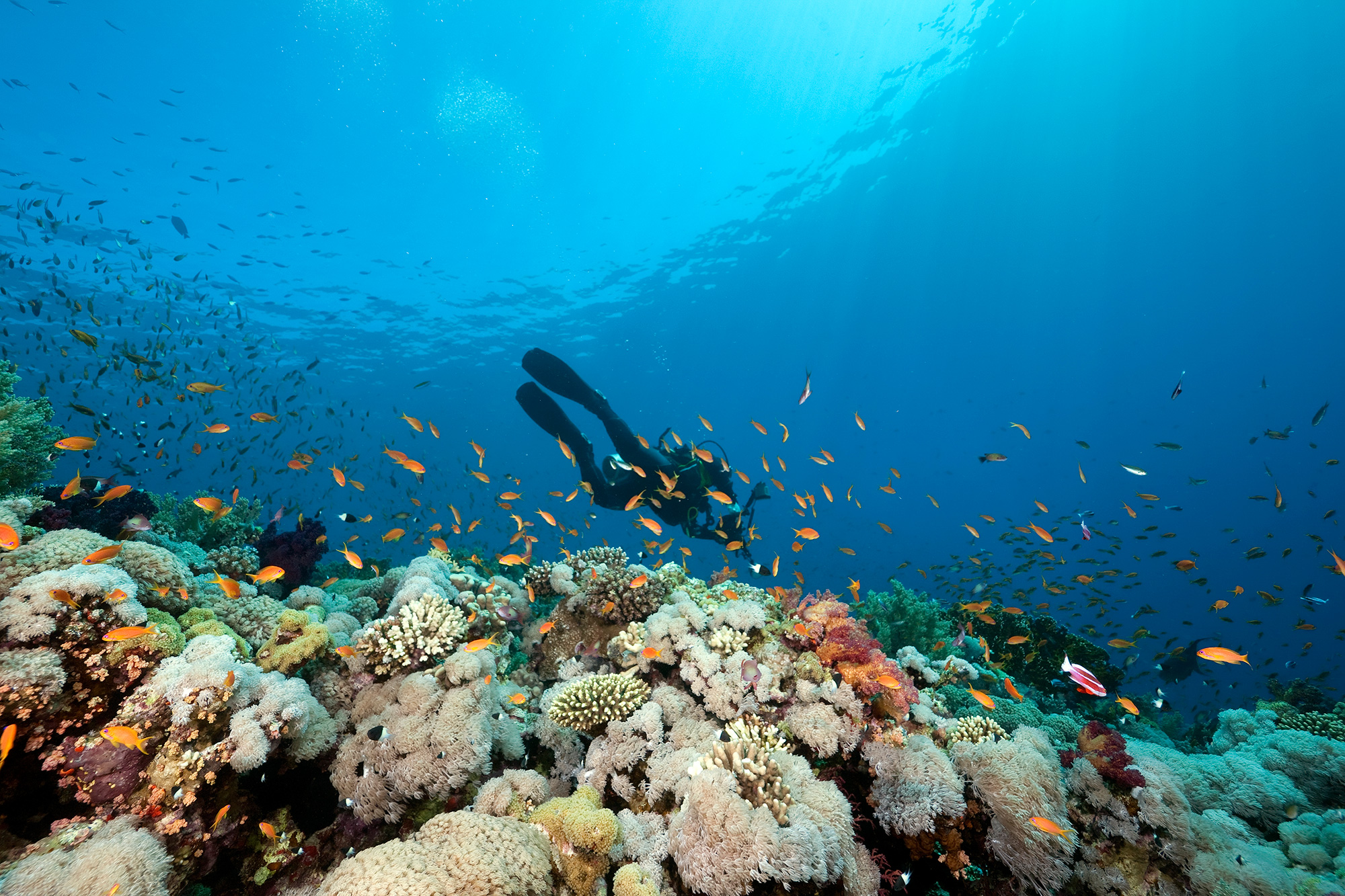 Image from Dive Bohol