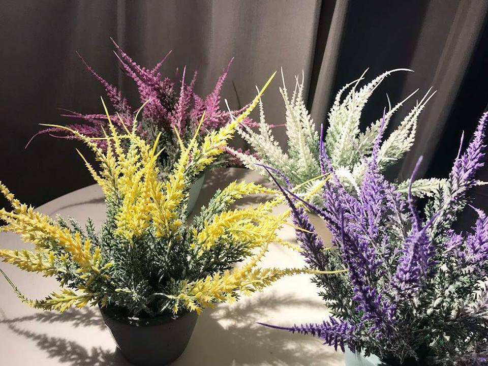 Bunga lavendar yang diletak di luar rumah.