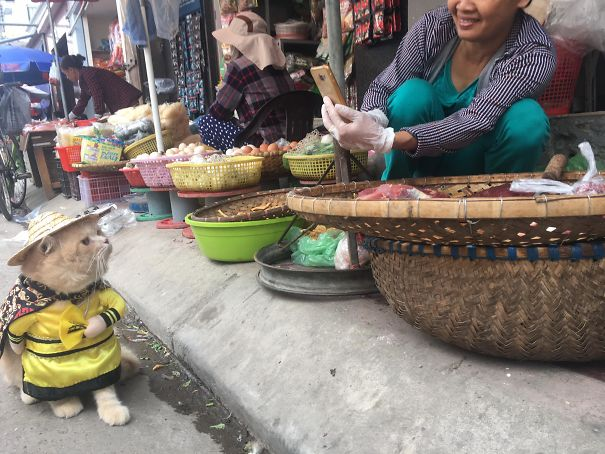 Dog being photographed by a fellow vendor.