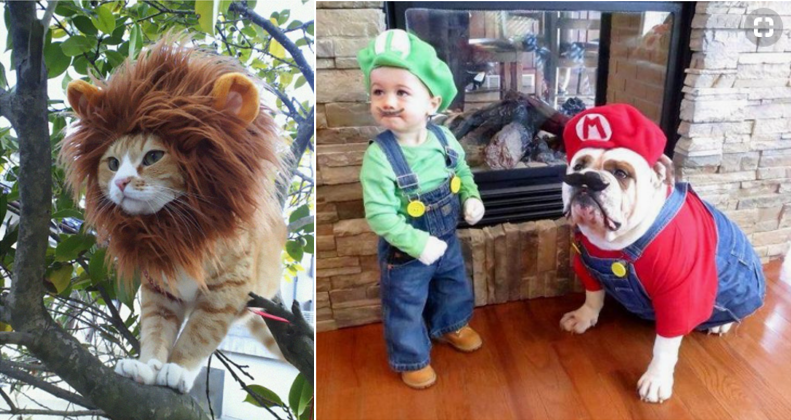 Take part in the Best Pet Costume Contest!
