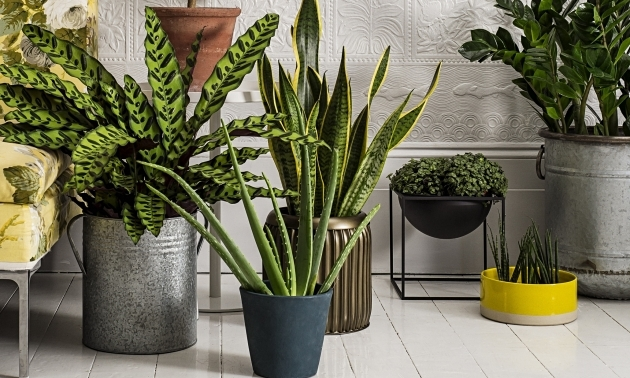 Image from Plants Ideas