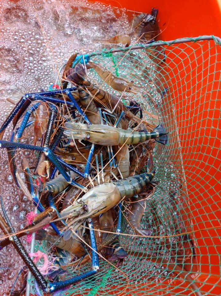 Image from Prawn Valley Farm