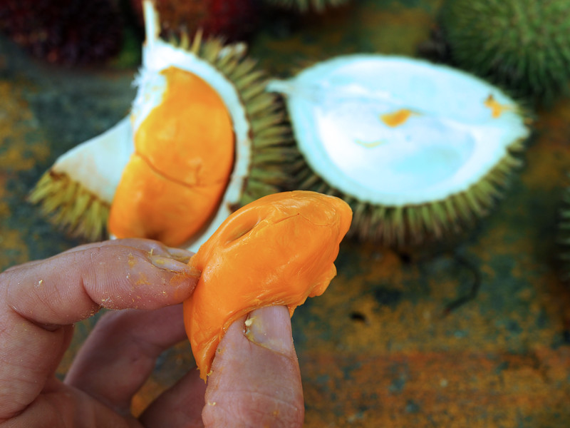 Image from Year of the durian