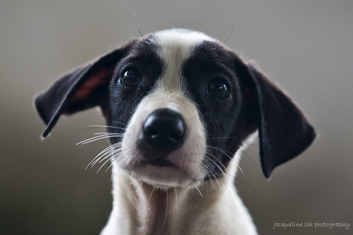 Image from Jacqueline Loh/Second Chance Animal Shelter