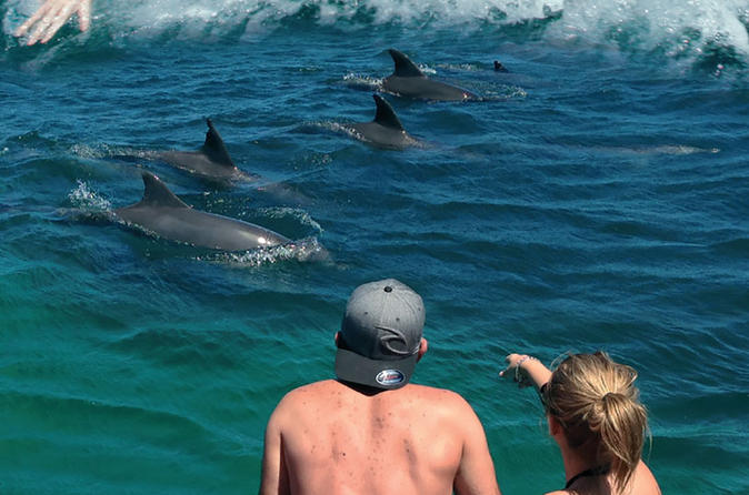 Go dolphin and whale watching on special cruises