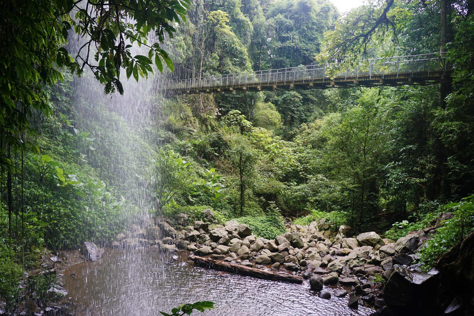 The suspension bridge at Wonga Walk to Crystal Shower Falls