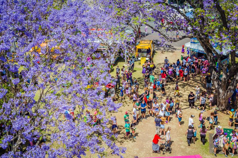 The purple Jacaranda trees in full bloom.