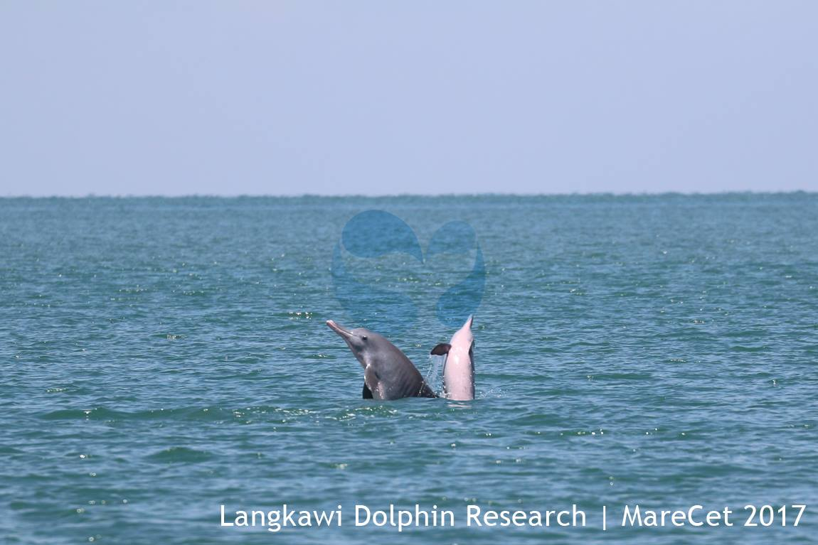 Image from Langkawi Dolphin Research