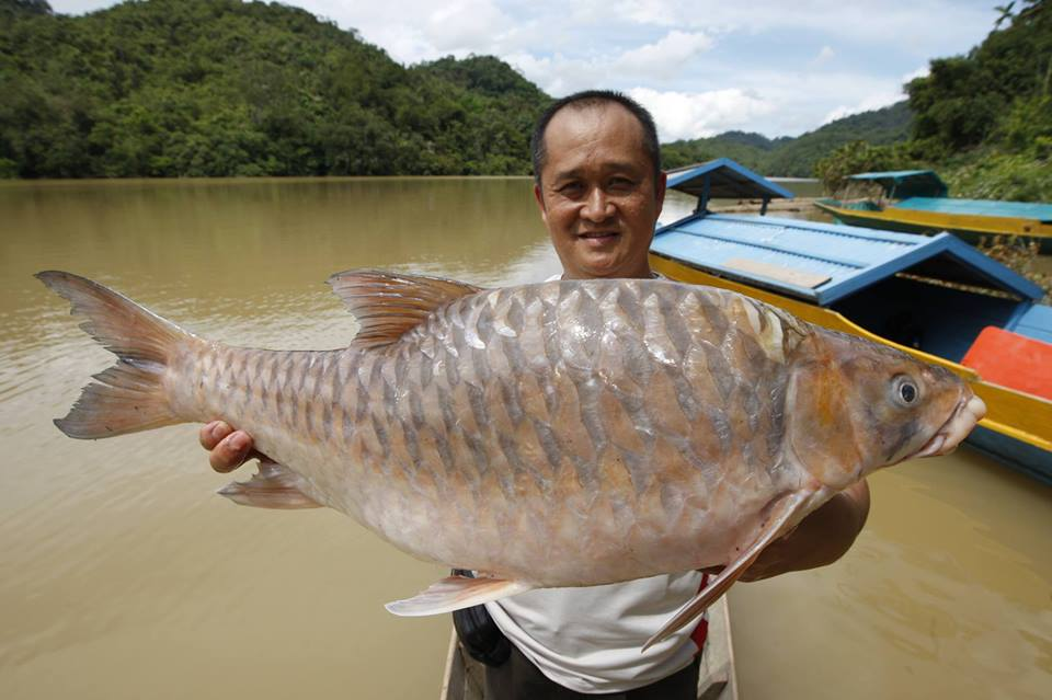 Image from Borneo Dihati