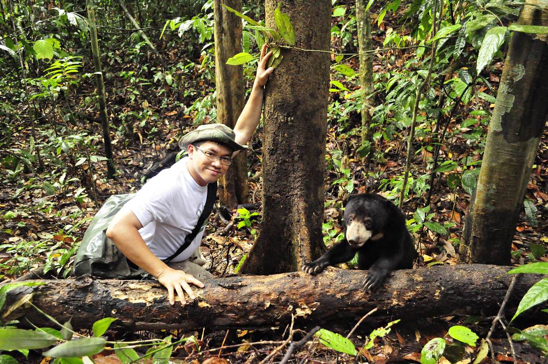 Image from Bornean Sun Bear Conservation Centre