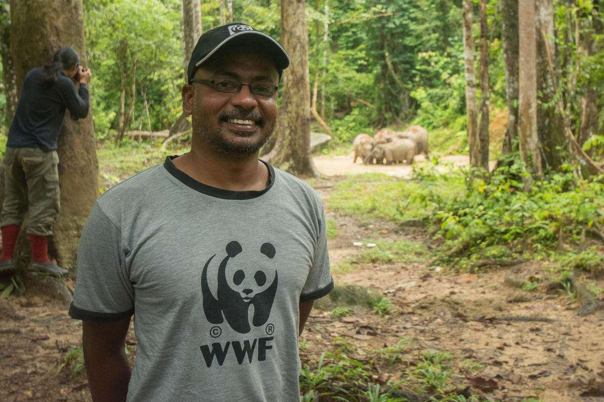 Image from WWF Malaysia, Shariff Mohamad