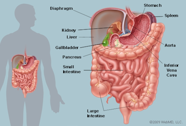 Image from webmd.com