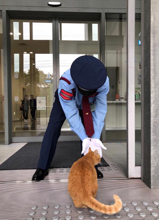 Cat Japan Museum