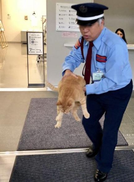 Cat museum japan