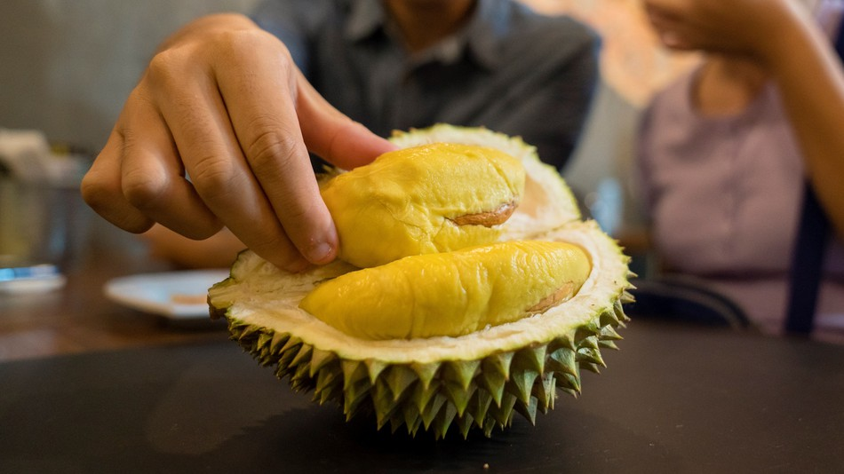 Hand holding open Durian