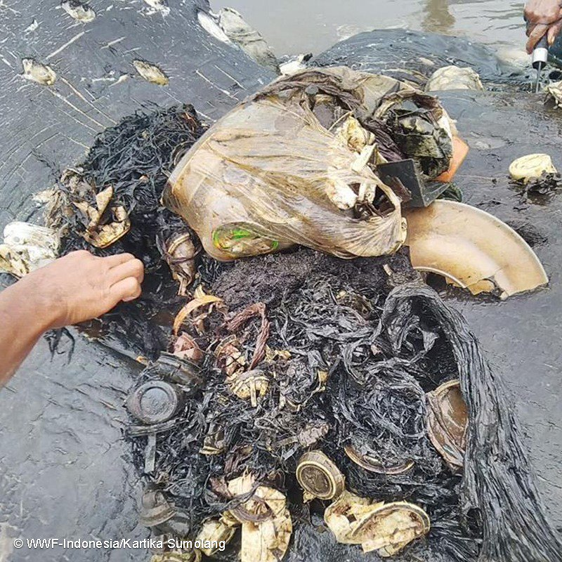 More than 1,000 pieces of plastic waste was found in the whale's stomach.