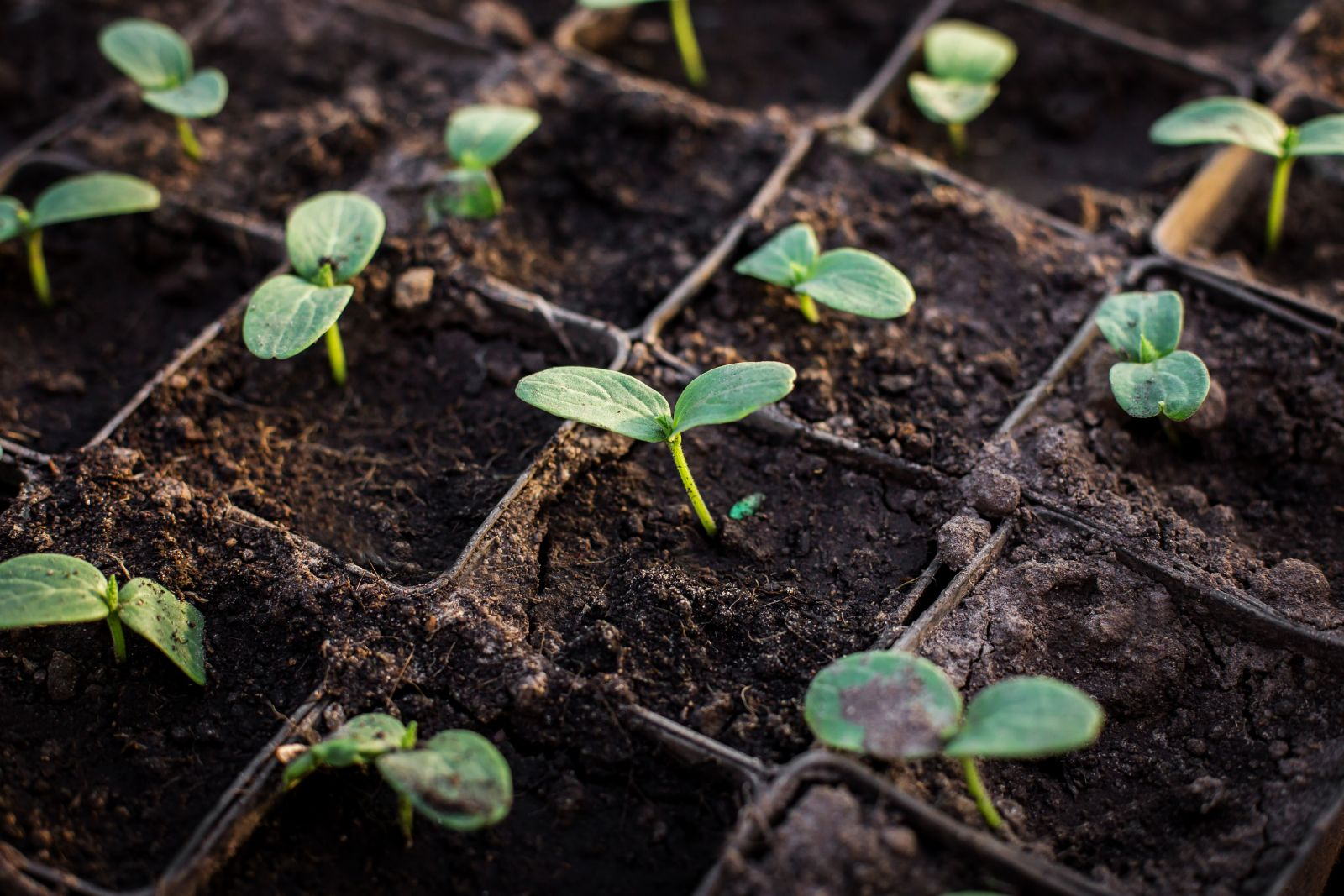 growing plants in compost