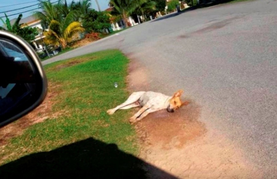 One of the viral images showed a dog killed near Taman Lavender Heights.