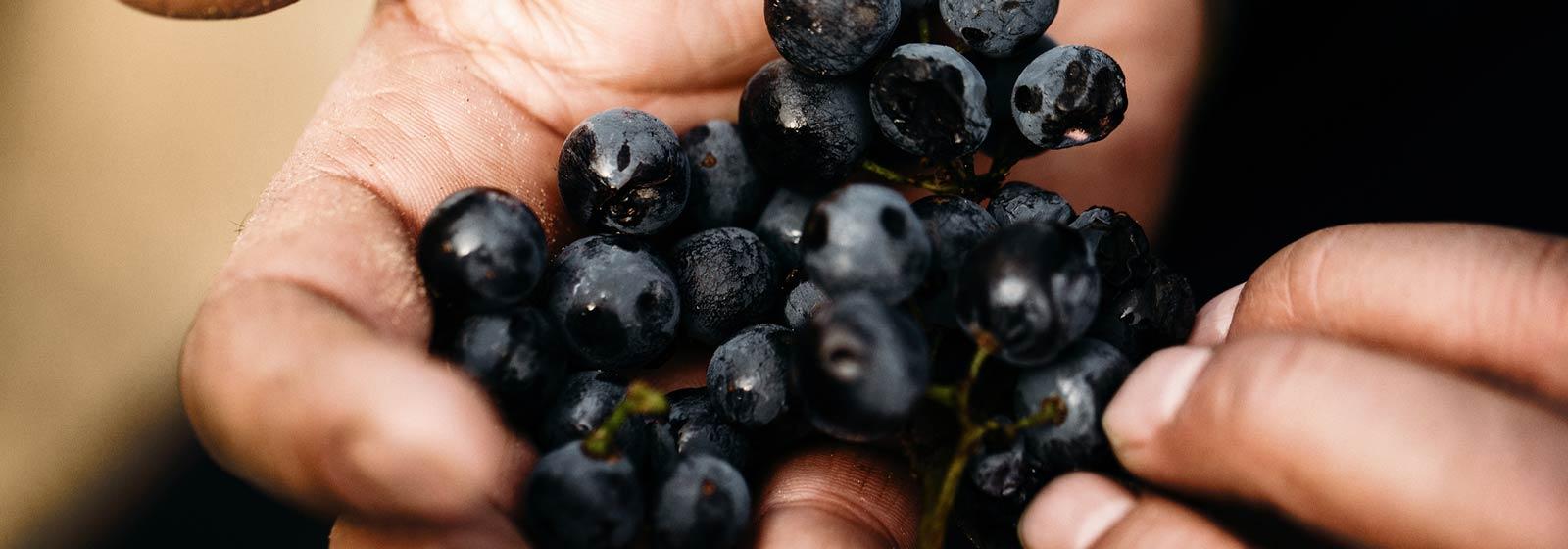 Image from Barossa Wine