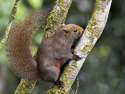Squirrels mainly eat plants and seeds but they also occasionally feed on insects.