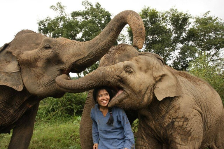 Lek Chailert with some of the rescued elephants.