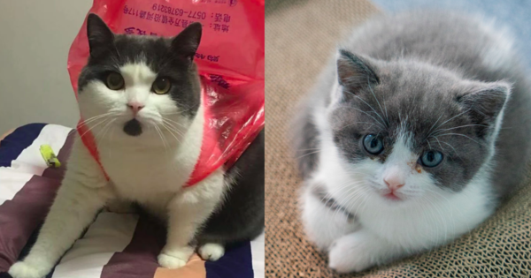 Huang's deceased cat and Garlic's clone.