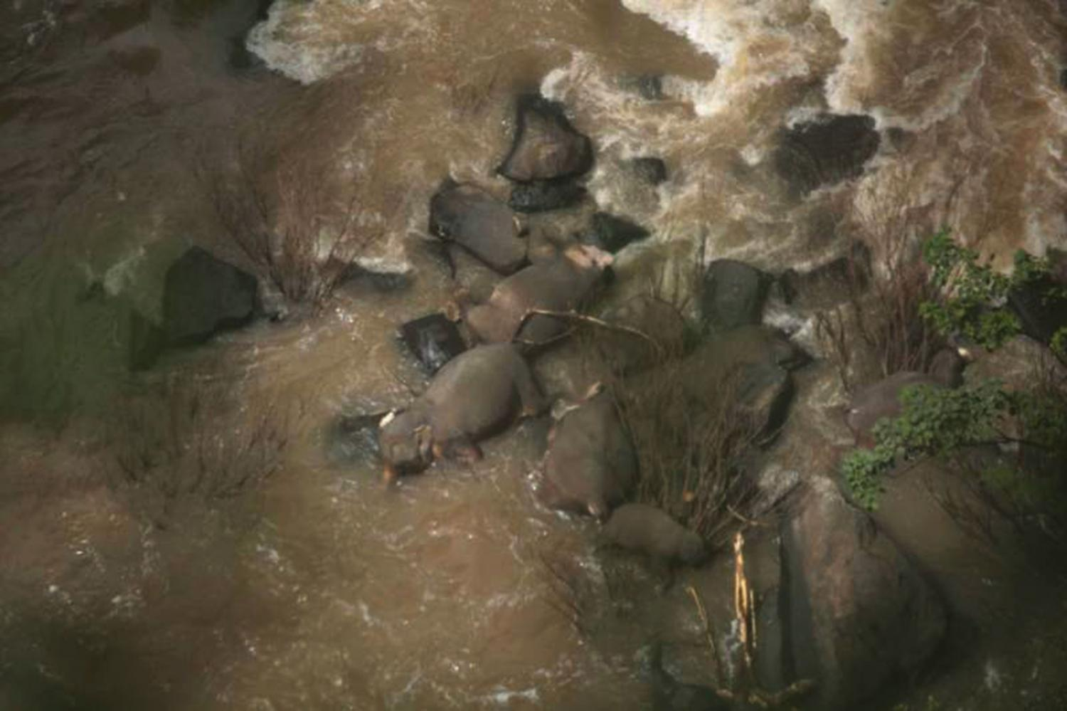 The bodies of six elephants are seen at the scene of the incident.