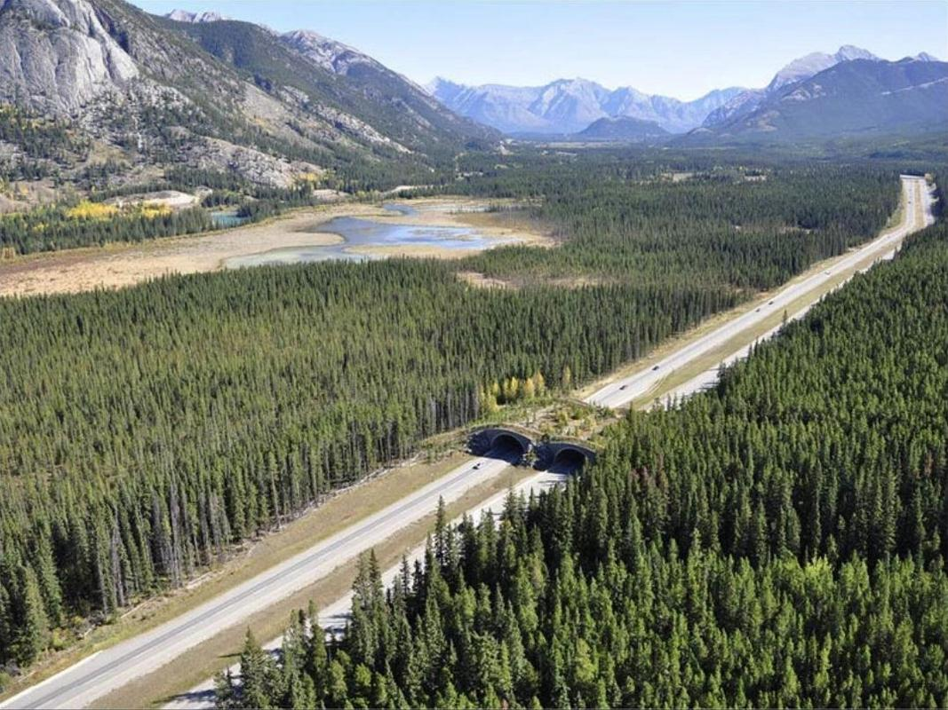 A wildlife crossing in Banff National Park, Canada, for wildlife to traverse the Trans-Canada Highway.