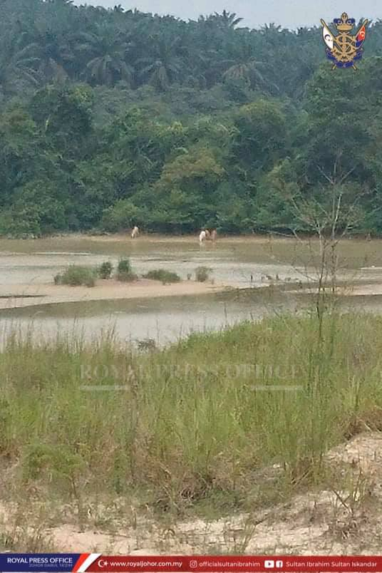 The picture on the Johor Sultan's Facebook page showing what appeared to be two white tigers by a riverbank.