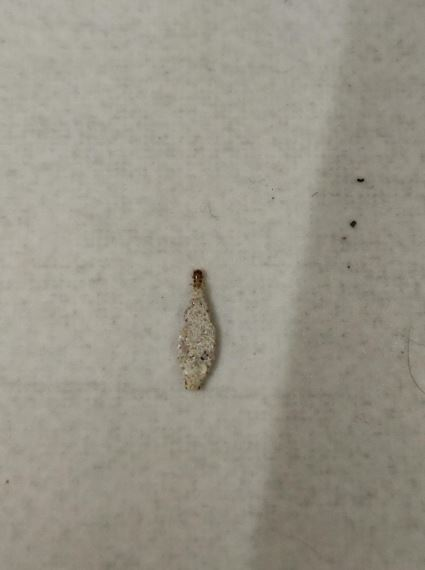 Weird Tiny White Co On The Wall