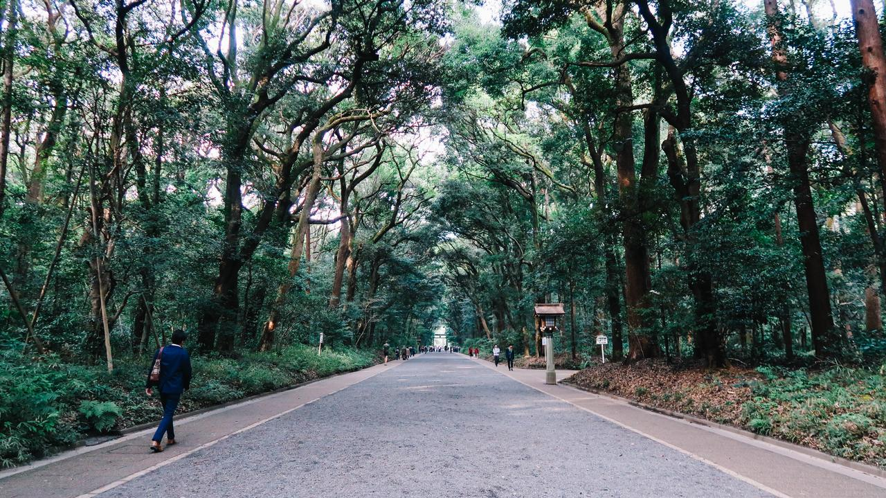 The forest leading to the Meiji Shrine.