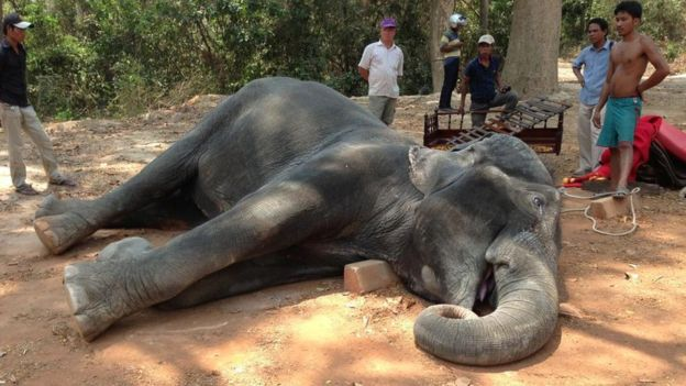 This elephant's death prompted thousands of people to sign the petition.