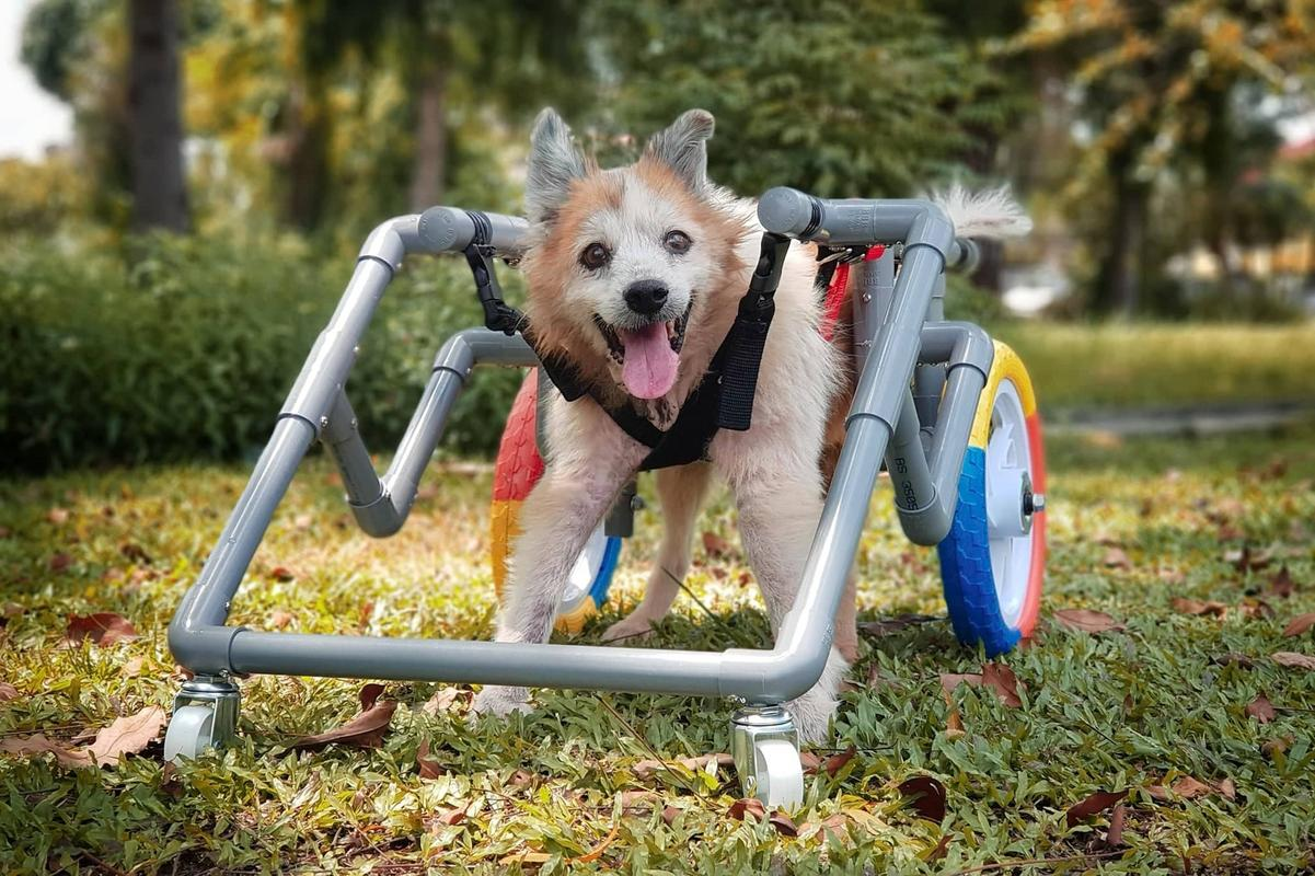 Image from Dog Wheelchair Malaysia